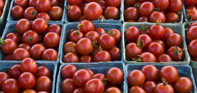 كيفية حفظ الطماطم لمدة طويلة