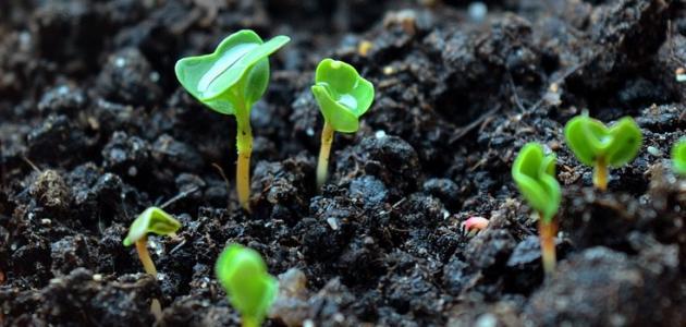 ما هي فطريات التربة