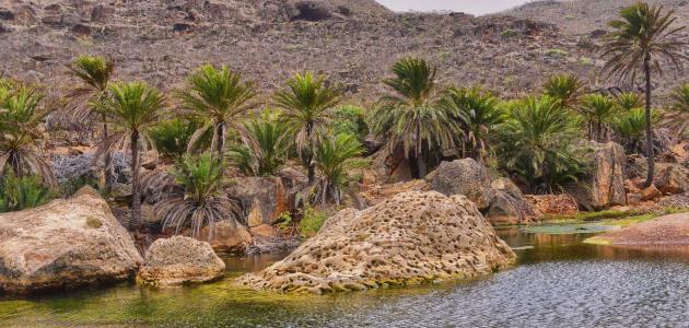 بحث عن جزيرة سقطرى اليمنية