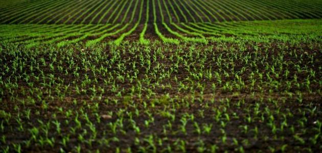 طرق حماية التربة الزراعية