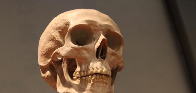كم عدد عظام جمجمة الإنسان
