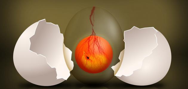 أي جزء من البيضة يحفظ الجنين من الجفاف الخارجي