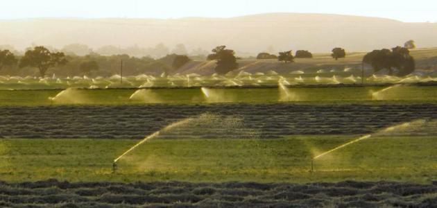 طرق زراعة البرسيم