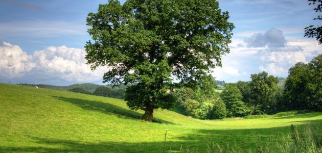 بحث عن أهمية الشجرة