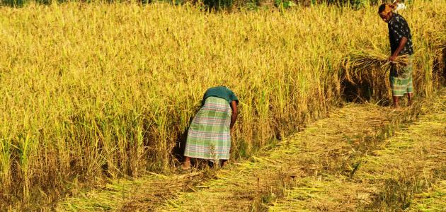 مراحل تطور الزراعة