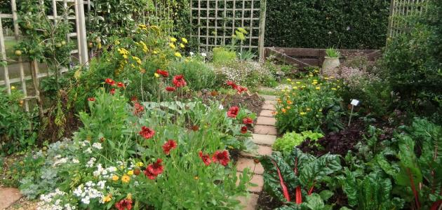 - Jardines sencillos y economicos ...