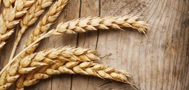 ملخص عن مرض تحسس القمح