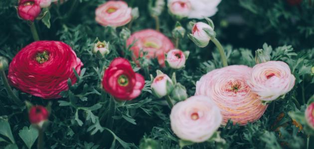 كلمات في جمال الورد