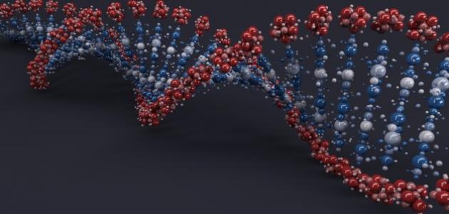 ما هو عدد الكروموسومات في جسم الإنسان