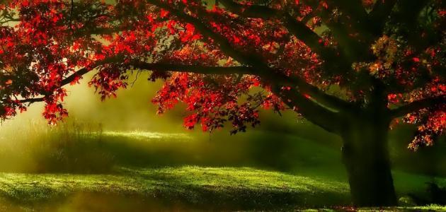 عبارات جميلة عن الشجرة