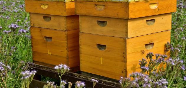 كيفية صنع صندوق لتربية النحل