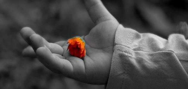 ما هو العفو والتسامح