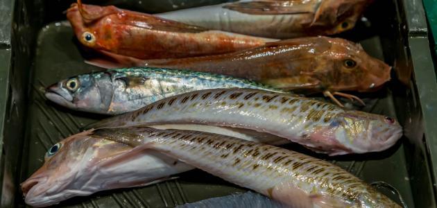 طريقة طهي سمك السلطان إبراهيم