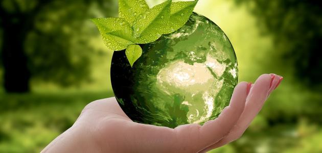 تقرير عن عالم البيئة