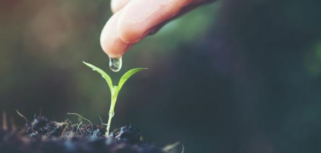 ما أهمية وجود الماء والنبات في النظام البيئي