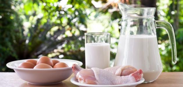 أغذية تحتوي على بروتين