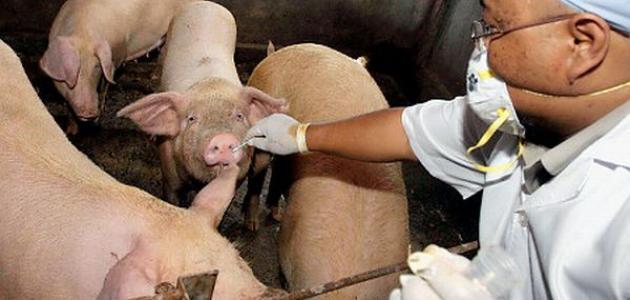 ما أسباب انفلونزا الخنزير