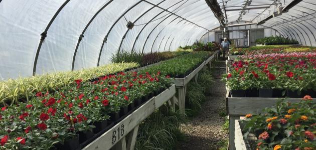 طرق الزراعة بدون تربة