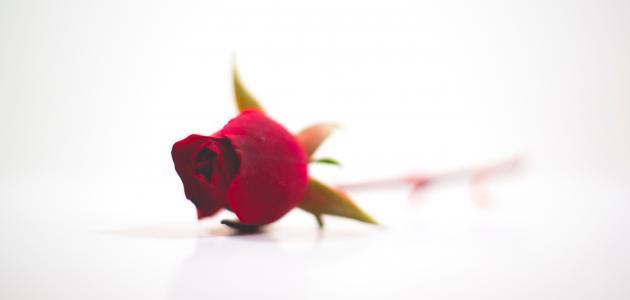 شعر عن الحب والرومانسية