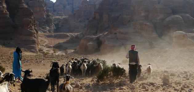 خصائص المجتمع البدوي