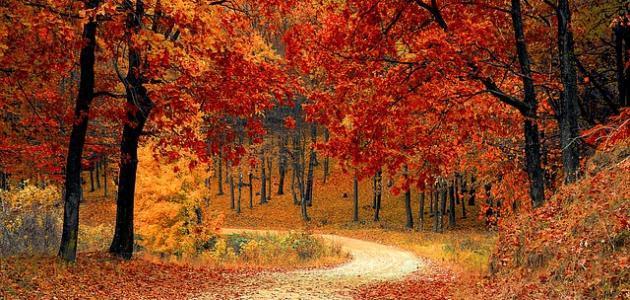 عبارات جميلة عن فصل الخريف