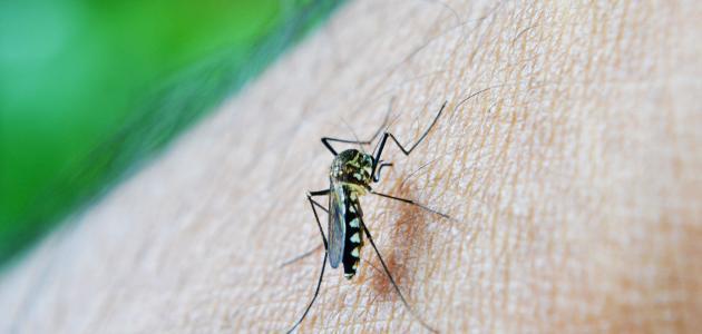 مقاومة الملاريا