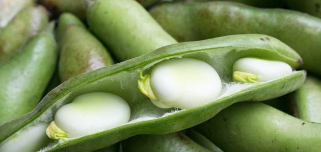 طريقة عمل يخنة الفول الأخضر