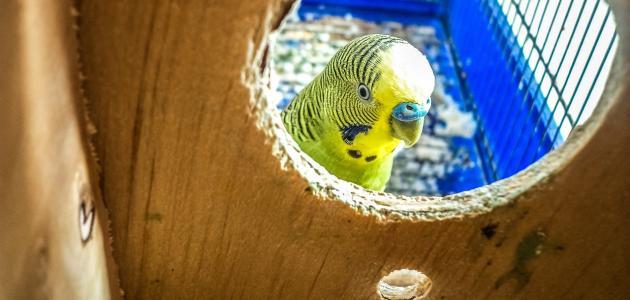 كيفية صنع قفص عصافير من الخشب