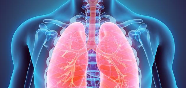 مكونات وتعريف الجهاز التنفسي
