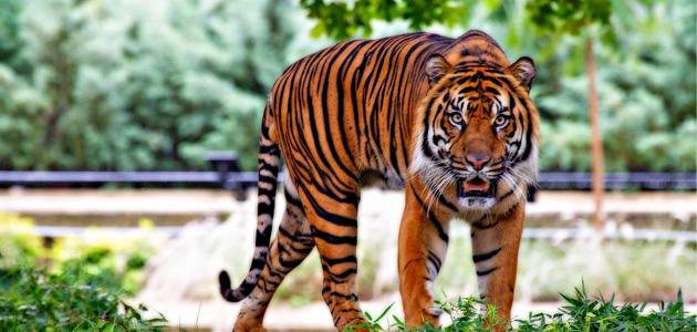 بحث عن تنوع الثدييات