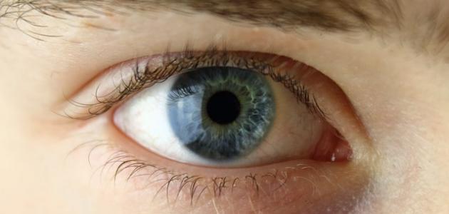 مكونات العين البشرية ووظائفها