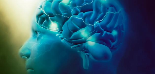 من ماذا يتكون الدماغ البشري