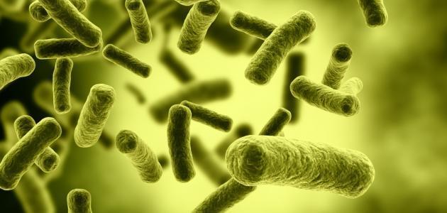 علم الوراثة الجزيئية بالانجليزي