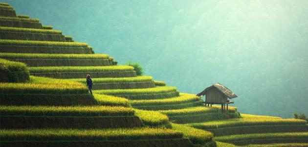 بحث عن تحسين الزراعة