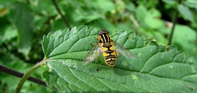 بحث عن تنظيم تنوع الحياة