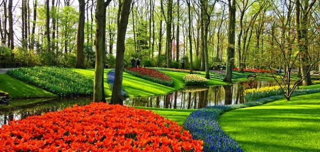 مدينة الورود في هولندا