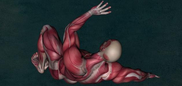 تشنج العضلات