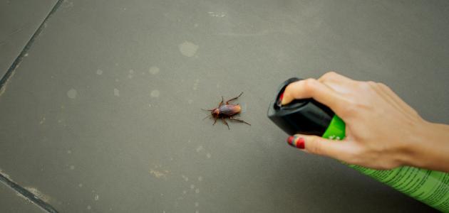 أسباب ظهور الصراصير