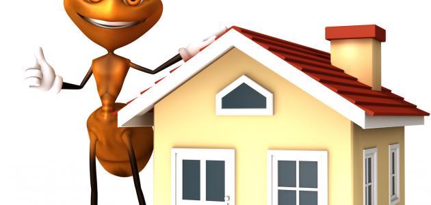 كيف نحارب النمل في البيت