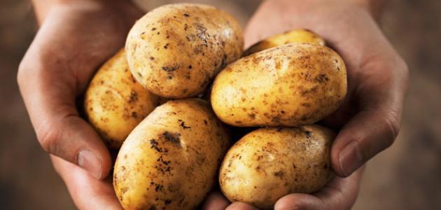 """اتّحاد الفلاحين ينبه: """"البطاطا المُوردة"""" تتسبب في أضرار  بصحة المواطنين"""