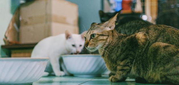 تربية القطط في الإسلام
