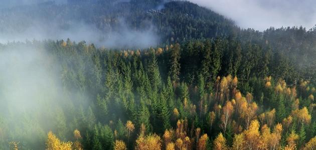أكبر الغابات في العالم