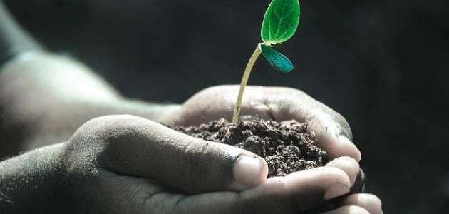 معايير مراقبة جودة التربة