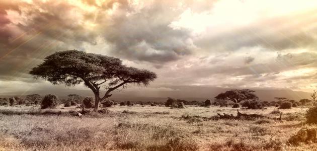 بحث عن تضاريس قارة أفريقيا