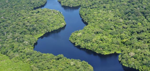 أكبر غابة في العالم