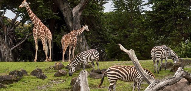 أكبر حديقة حيوان في العالم