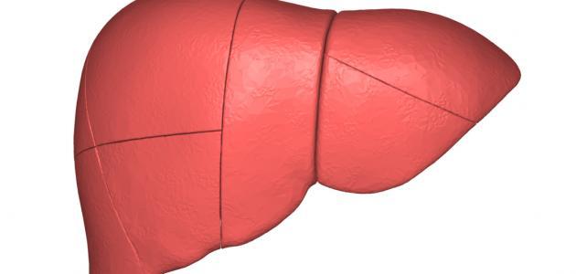 أفضل علاج لدهون الكبد