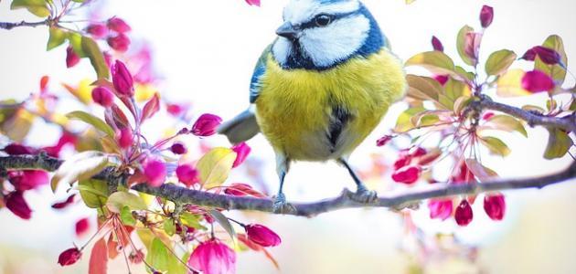 أجمل الطيور المغردة