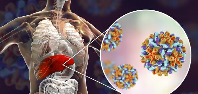 تحليل فيروسات الكبد