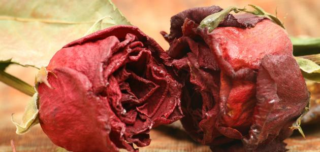 كيف نجفف الورد الطبيعي